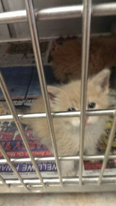 Odessa Animal Shelter scheduled to die 5/14 - This kitten has Almost no share! Please, help, share.