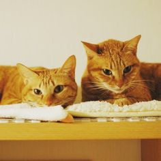 Beautiful Ginger Twins...