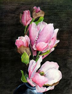50 most beautiful flowers in the world pinterest magnolia flower watercolormagnolia magnolia flowerpainting watercolor httppinr7ylzmw mightylinksfo
