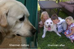 Sherman the Tank!  This big lovebug was depressed and dirty at the West LA shelter.  He lives in San Diego now and is the neighborhood dog to all the kids.