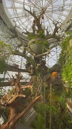 Earthship Home, Nature Aesthetic, Waiting Rooms, Dream Home Design, Fantasy Landscape, Greenhouses, Beautiful Architecture, Back To Nature, Conservatory