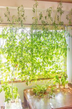 Hydroponics, Garden, Flowers, Plants, Interior, Indoor, Garten, Gardening, Floral