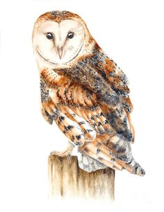 Barn Owl Painting by Marie Burke