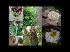 Medicinal Rice B4 Formulations for Pseudomertensia Allergy: Pankaj Oudhi...