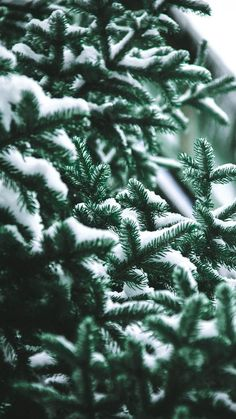 10 Hand-Picked Stunning Christmas Background for iPhone: 10 Free Hand-Picked HD Christmas Background for iPhone Download Wallpaper Winter, Christmas Phone Wallpaper, Holiday Wallpaper, Nature Wallpaper, Wallpaper Backgrounds, Iphone Wallpapers, Winter Wallpapers, Snow Wallpaper Iphone, Iphone Backgrounds