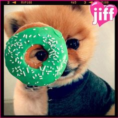 JiffPom photos, cutest celebrity dog on Instagram