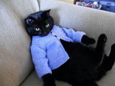 Cat, hating the granny cardigan.