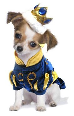 Majestic Prince Charming two piece Dog Costume with Bejeweled Crown Headpiece. Color Royal Blue. Shown on Dog.
