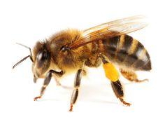 3 raisons de ne pas manger de miel