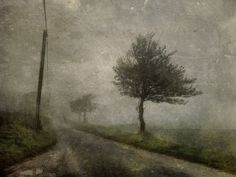 The road to madness by Sarah Jarrett, via Flickr
