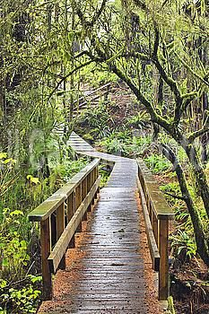 Boardwalk through rainforest on the wild pacific trail; ucluelet vancouver island british columbia canada