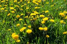 Understanding Weeds – How to Kill them?