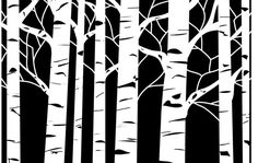 Forest Trees Mascil Stencil Create Delicate And