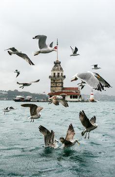 acrobatic gulls by Yaşar Koç on 500px