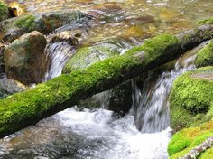 Moss My Eyes, Waterfall, Outdoor, Outdoors, Waterfalls, Outdoor Games, The Great Outdoors