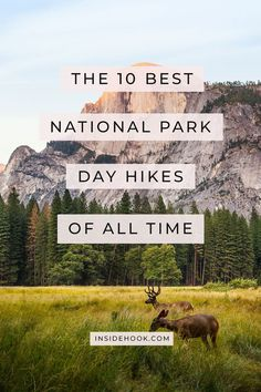 Consider this your bucket list of the 10 best day hikes in our national parks, from Zion to Guadalupe Peak. Consider this your bucket list of the 10 best day hikes in our national parks, from Zion to Guadalupe Peak. Hiking Places, Places To Travel, Travel Destinations, Travel Diys, Estes Park Colorado, Colorado Hiking, Great Smoky Mountains, Death Valley, Les Fjords