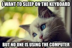 First world kitty problems.