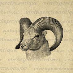Printable Image Goat Graphic Ram Digital by VintageRetroAntique