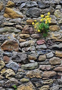Flowered Rock Wall, Scotland  NOTE OT ME _ MURAL _ROCK WALL