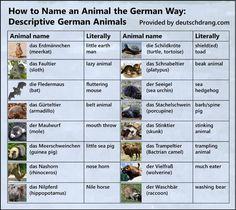 #animales #alemán #aprenderalemán