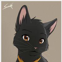 http://rs1133.pbsrc.com/albums/m596/belloblossom/Cats/BlackCat_zps17a8078c.png~c200
