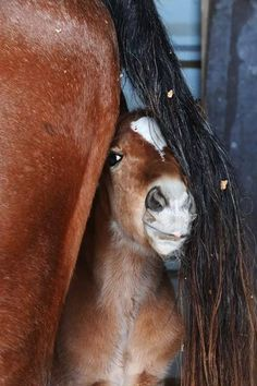 This week's winning entry is from Terryn Kirkham from Tauranga with this delightful photo of her beautiful new Foal Zala at 12 hours old trying to hide.   Terryn wins this week's great Vetpro Photo of the Week prize pack.