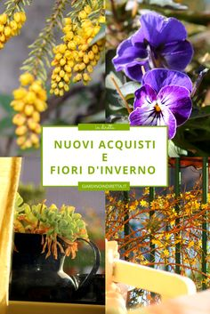 nuovi acquisti e fiori dorati d'inverno - un giardino in diretta