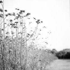 Heaven Can Wait, I Am Not Afraid, Field Of Dreams, Ever And Ever, Claude Monet, Black And White Photography, Autumn Leaves, Wild Flowers, Fields