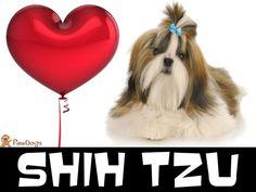 Love Your Shih Tzu!