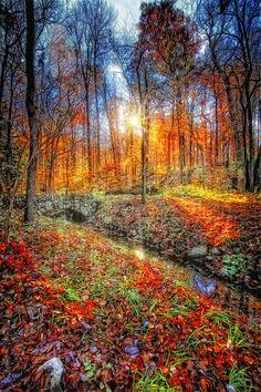 Fall Art Photograph  - Fall Art Fine Art Print/George Saad