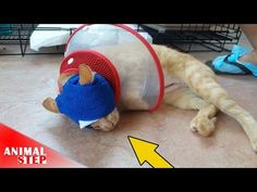 Poor Cat with Badly Eyes Infected Getting Rescued - YouTube