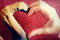Είστε έτοιμοι να γνωρίσετε και να υιοθετήσετε ένα σκυλάκι αλλά δεν ξέρετε πού να απευθυνθείτε; Η καλύτερη ιδέα, αν δεν έχετε βρει ήδη ένα αδέσποτο στον δρόμο σας να περιμένει την δική σας αγκαλιά, είναι να υιοθετήσετε ένα σκυλάκι από μια φιλοζωική. Ευκαιρία λοιπόν να επισκεφτείτε μια από τις παρακάτω εκδηλώσεις που γίνονται αυτό το Σαββατοκύριακο. Και πού ξέρετε; Ίσως εκεί συναντήσετε δύο υπέροχα και γλυκά μάτια που θα σας κλέψουν την καρδιά και θα τα πάρετε μαζί σας φεύγοντας! Bazaar για τα…