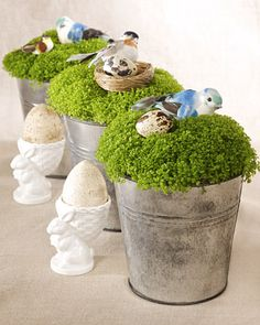 Irish Moss Centerpiece