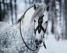 """The storms of winter has arrived, and when there are no forest left to shield you and when the mountains is roaring with echoes of… Pretty Horses, Horse Love, Beautiful Horses, All About Animals, Animals And Pets, Cute Animals, Animals Photos, Horse Gear, Horse Tack"