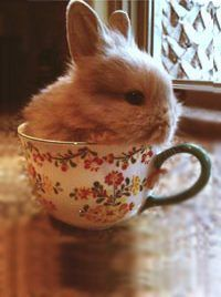 Bunny in a tea cup