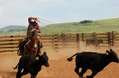 working ranch in CO Cowboy Photography, Cowgirl And Horse, Real Cowboys, Western Riding, Ranch Life, Travel Humor, The Ranch, Farm Life, Country Life