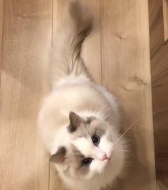 Welcome to the Memes Panda where you can find lots of cute, funny and adorable videos about Pets. If you are a cat lover, you are in the right place. Cute Baby Cats, Cute Kitten Gif, Cute Little Animals, Cute Cats And Kittens, Cute Funny Animals, Cat Gif, Kittens Cutest, Funny Cats, Pretty Cats