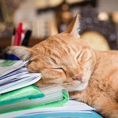 Orange Cat Names: 350 Best Names for Ginger Kittens Tabby Cat Names, Ginger Kitten, Oliver And Company, Orange Tabby Cats, Cat Sleeping, Halloween Cat, Cool Names, I Love Cats, Pet Birds