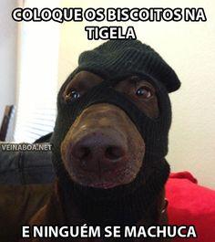 Mais um ladrão de biscoitos!!  Veja mais em: http://www.jacaesta.com/mais-um-ladrao-de-biscoitos/
