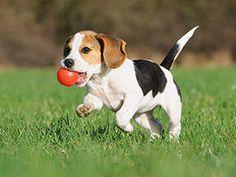 Stages of puppy development | Cesar Millan