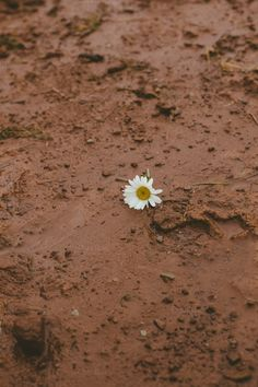 Daisy in mud by Sean Berrigan Photography on Creative Market