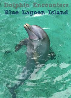 Dolphin Encounters at Blue Lagoon Island in Nassau Bahamas. A one-of a kind experience for all ages. #Dolphins #Bahamas #BlueLagoon