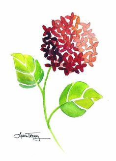 Fuschia Hydrangea: watercolor painting lauratrevey.etsy.com