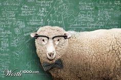 are sheep smart