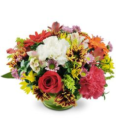 Give thanks to someone special - or celebrate the season - with our Harvest Burst bouquet! Featuring robust red roses, multi-colored bursts of mini gerbera daises, brightly-blooming carnations and more, this arrangement is a true feast for the senses! Makes a dazzling centerpiece, as well as a vibrant addition to any home or work space!  A cheerful arrangement of three red roses, mini gerbera daisies, carnations, alstroemeria, and chrysanthemums in a green pedestal vase.