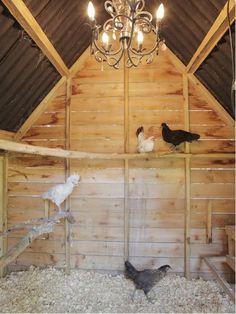 chicken roost ideas #chickencoopdiy