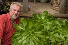aeonium undulatum. Aeonium is een geslacht uit de vetplantenfamilie (Crassulaceae). De naam komt van het Griekse 'aioon', dat volhardend of eeuwig betekent. Dit is om aan te duiden dat ze hun bladeren nooit helemaal verliezen.