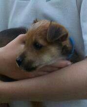 Baby Rigby