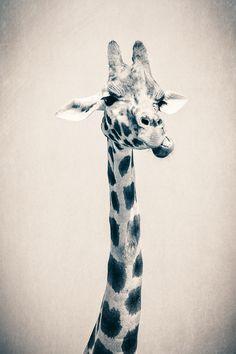 @Kimberlee Thomas so cuteee :)