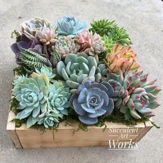 A dozen Succulents in an 8 rustic wooden planter Valentines Day Gift hostess gift business gift housewarming wedding or sympathy gift Succulent Planter Diy, Succulent Gifts, Succulent Centerpieces, Succulent Arrangements, Wedding Arrangements, Succulent Care, Planter Pots, Fall Planters, Succulents In Containers